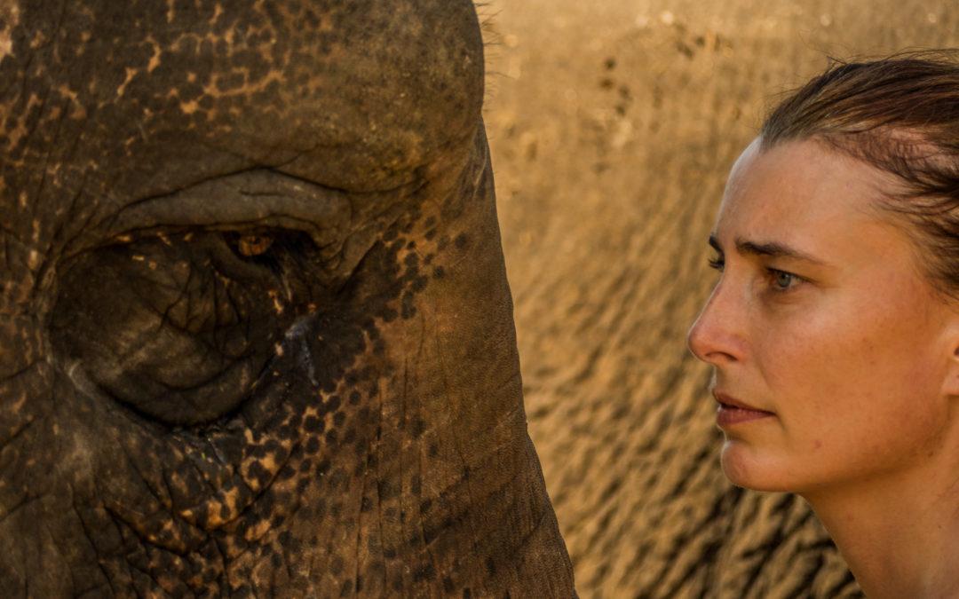 Stage en présence d'éléphants